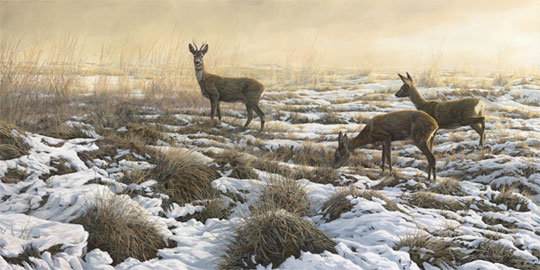 Roe deer painting - Picture of roe buck with two doe roe in snow