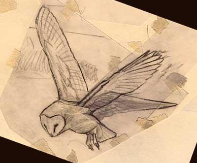 sketches of birds. Pencil sketch