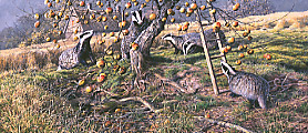 Apple harvest, Badgers - limited edition wildlife print