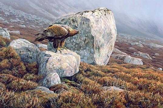 Eagle picture wallpaper
