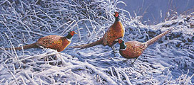 Wildlife print: ring-necked pheasants in the snow, limited edition print