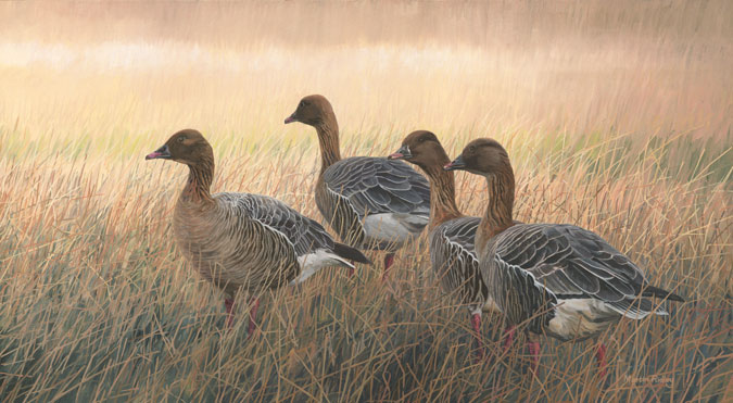 Pink-footed geese print on canvas