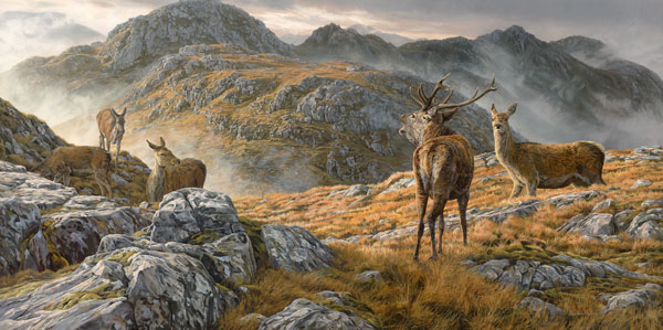 Roaring red deer stag amongst hinds on Druim fada ridge - Red deer print from an oil painting by Martin Ridley