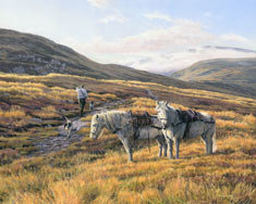 Highland Garrons - scottish stalking ponies print from a picture by Martin Ridley