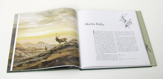 Golden Evening - Red Deer Stags Watercolour