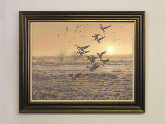 A small flock of pink-footed geese settling in a marsh. Canvas print