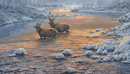 Red Deer Stags River Crossing Oil Painting for Sale