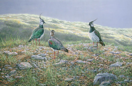 Lapwing picture - painting on canvas
