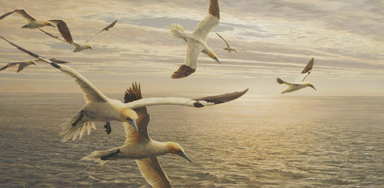 oil painting of gannets diving