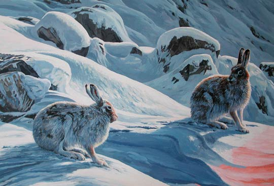 Mountain Hare Picture Original Paintings And Prints For Sale
