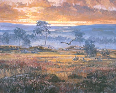 Oil Painting By Walcutt Owl