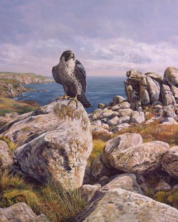 انواع الصقور peregrine-falcon_coa