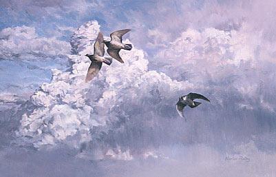 peregrine-falcon_pigeons.jpg