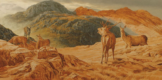 Roaring Red Deer Stag with hinds  on Druim Fada by Loch Hourn. Original oil painting