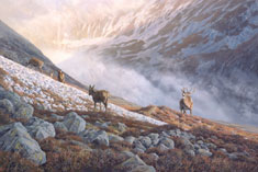 red deer stag and hinds print - stalking scene